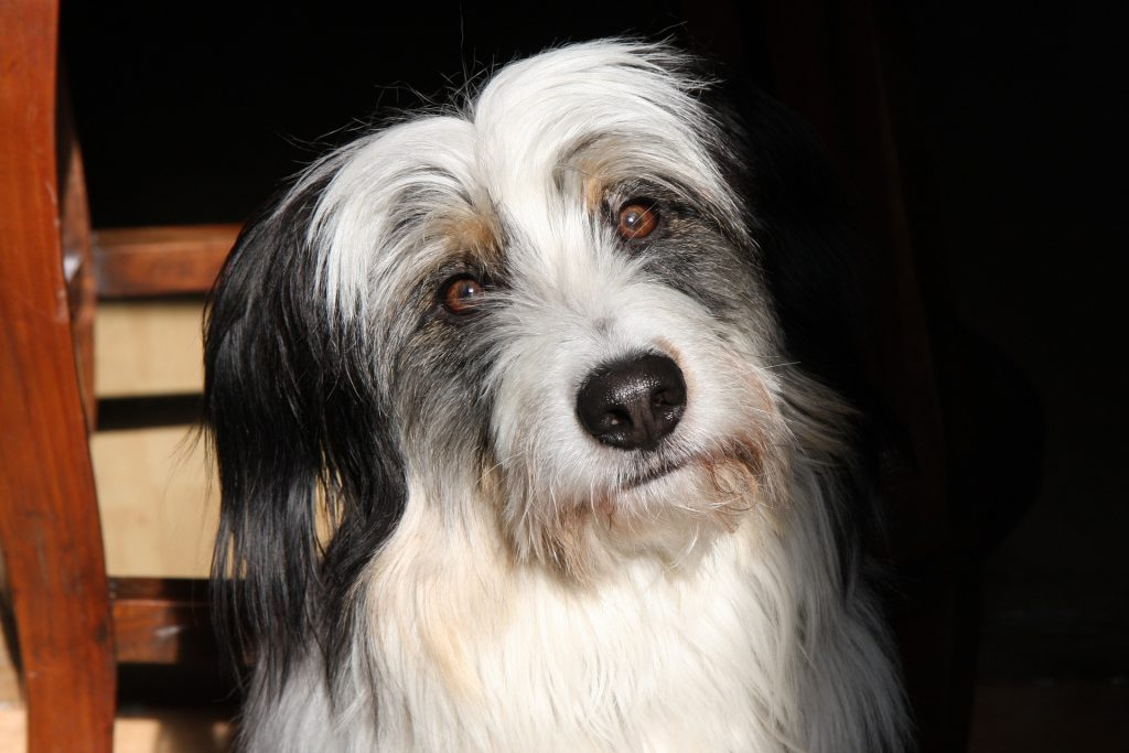 silbato para callar perros, silbato para perros ultrasonico, silbato para perros como funciona