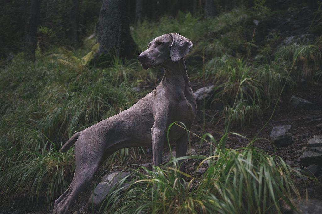 silbato perros