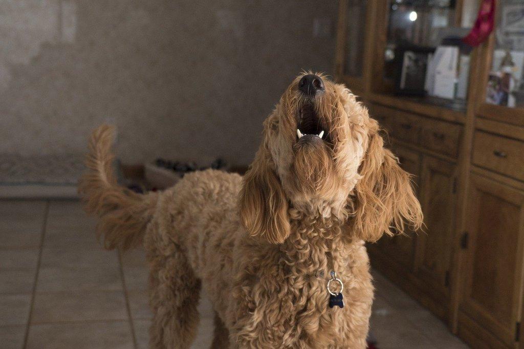 perro que ladra mucho, silbato para perros dejar de ladrar, silbato ahuyenta perros, sonido callar perros