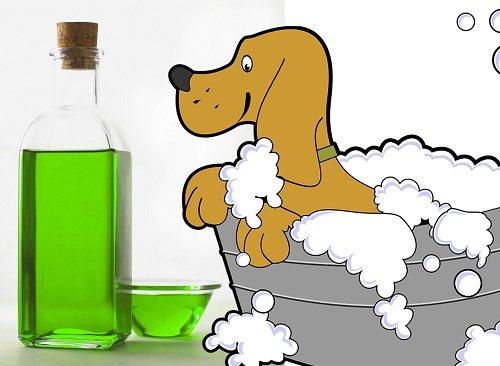 Shampoo casero para perros