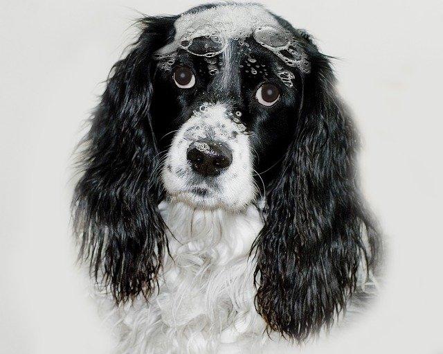 champu casero para perros